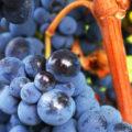 Vin de Sicile Nerello Mascalese