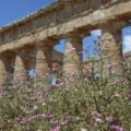 Les Temples de la Sicile